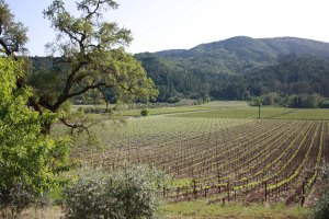 Inglenook Vineyards. Courtesy Sherry Monahan.