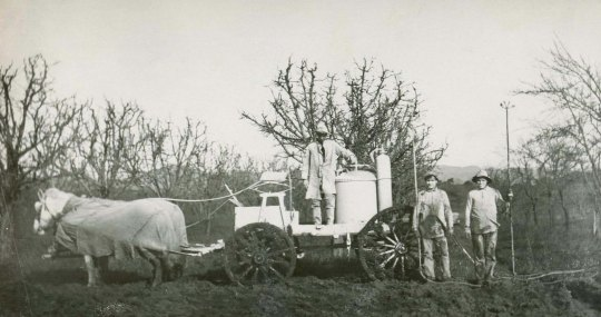 George L. Throne pear spraying crew 1911. Courtesy of Diane Dillon.